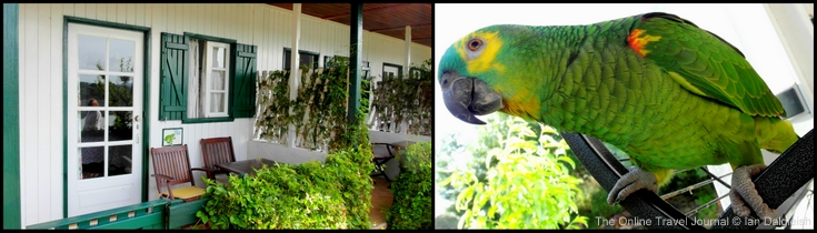Quinta do Barranco da Estrada - Accommodation &amp; Parrot