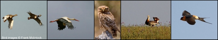 Birds of the Alentejo, Portugal