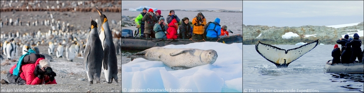 Oceanwide Expeditions- close to wildlife montage