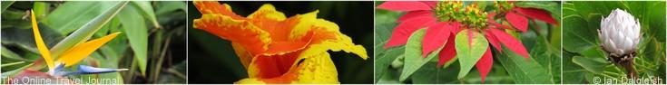 La Gomera flora