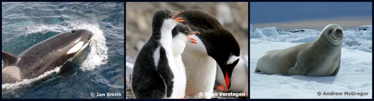 antarctica wildlife