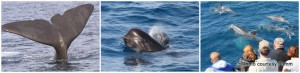 Whale Watching Strait of Gibraltar