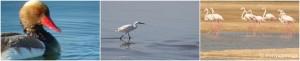 Birdlife Ria Formosa_Portugal