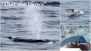 From left: Fin whale, Common dolphins & Pont Aven