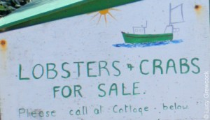 Pre-order your lobster on Bryher