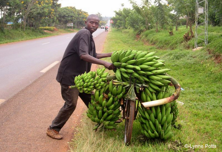 Man with bananas_Rwanda © Lynne Potts