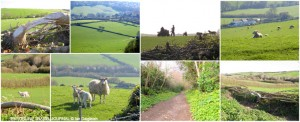 Dorset Countryside in Spring