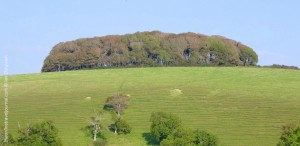 Heart Clump from the west, Littlebredy, Dorset