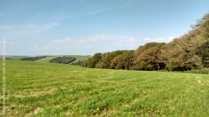 Skirting Farm Wood  in Littlebredy CP, Dorset